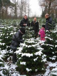 weihnachtsbaum-2010_07